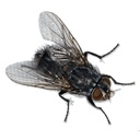 Pest control / Flies