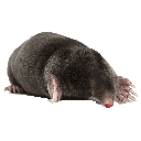Pest control / Moles and voles